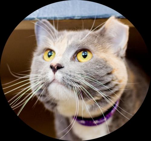 Cat1Baby